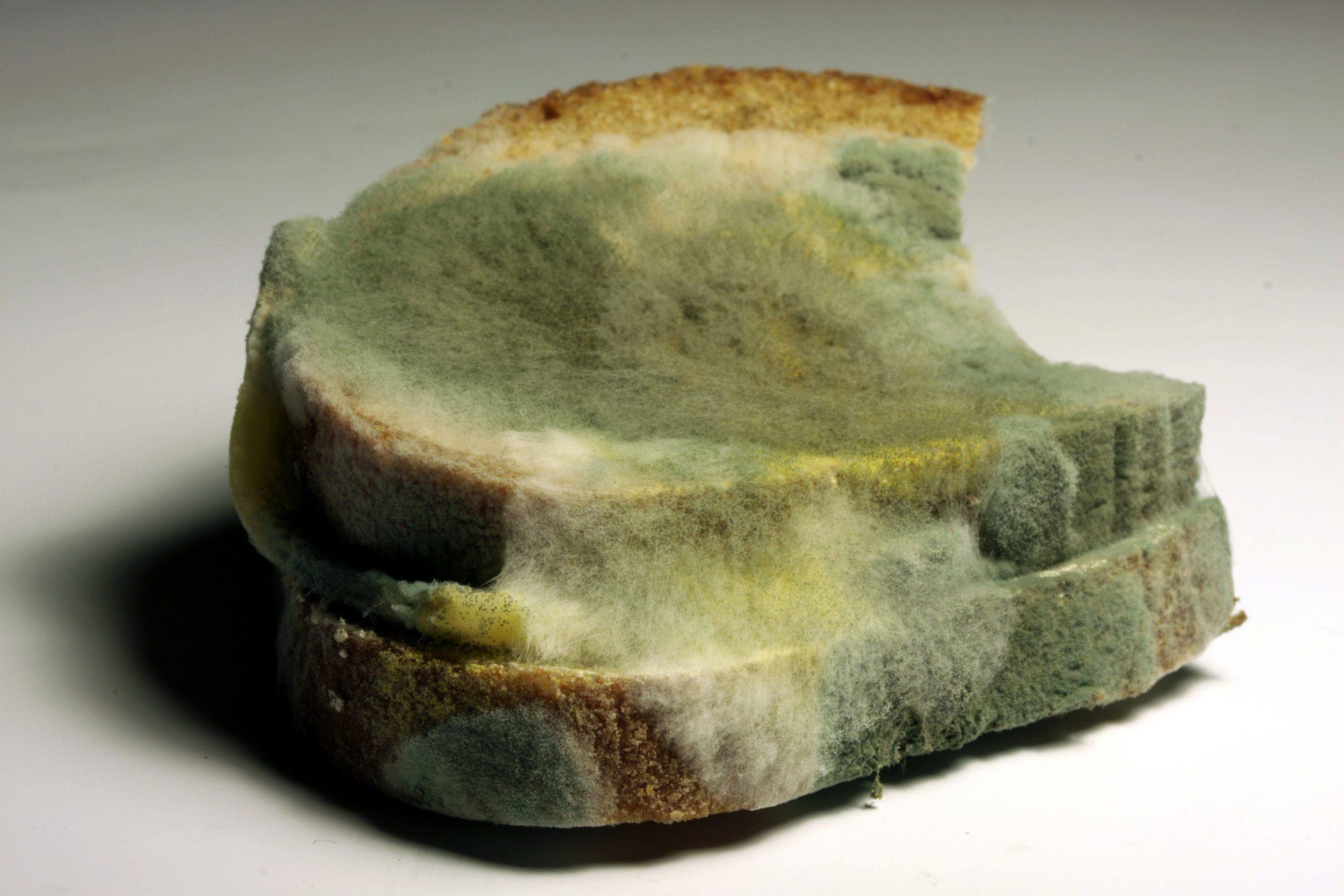 Rotten Bread of Love